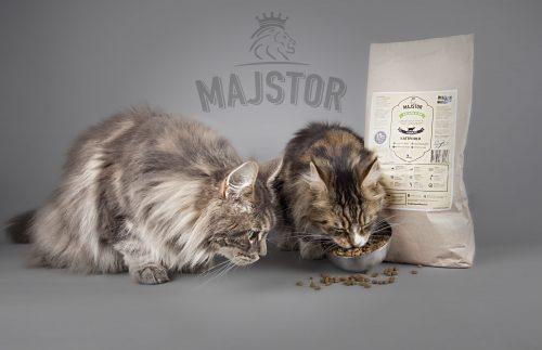 Två katter äter Majstor kattmat
